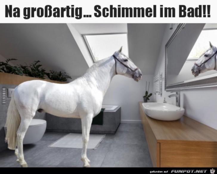 Na großartig.... Schimmel im Bad !!!