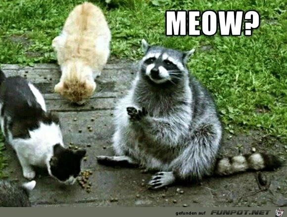 Ich bin auch eine Katze
