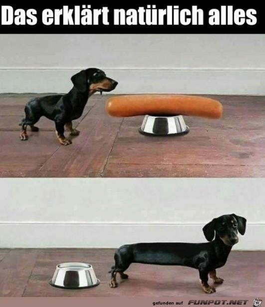 Der Wiener