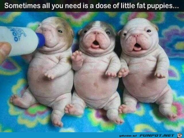 Kleine fette Welpen