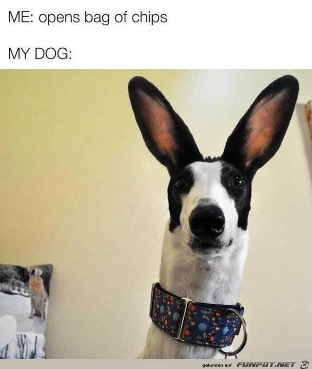 Hund hat Chipstüte gehört