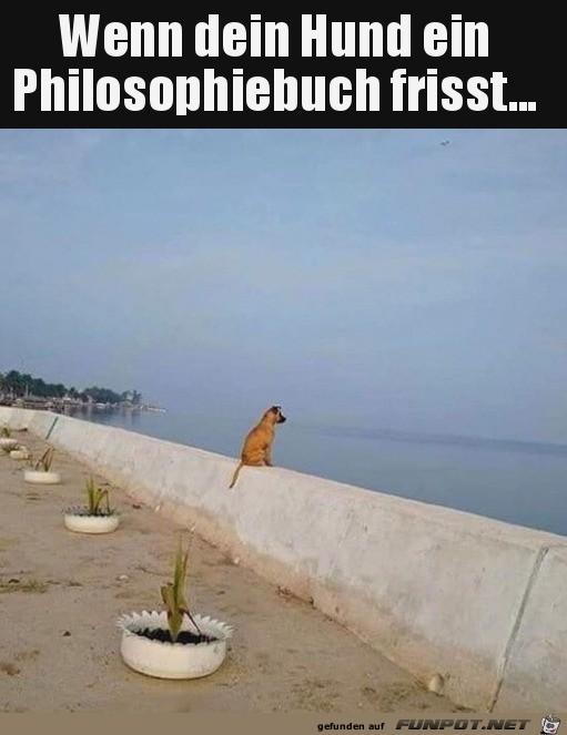 Hund starrt aufs Meer