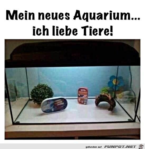 Tolles Aquarium