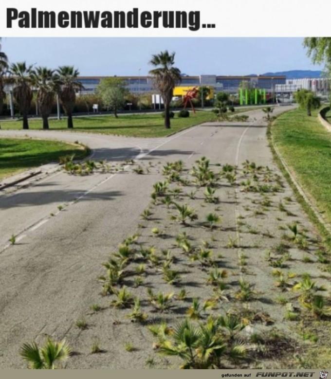 Die Palmen machen einen Ausflug