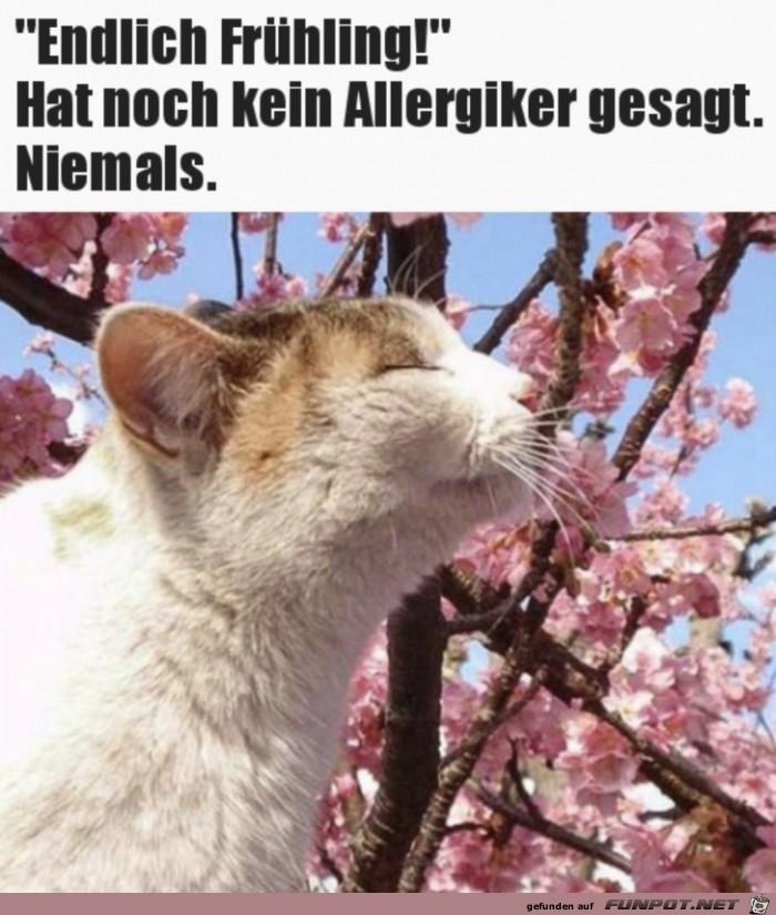 Nichts für Allergiker
