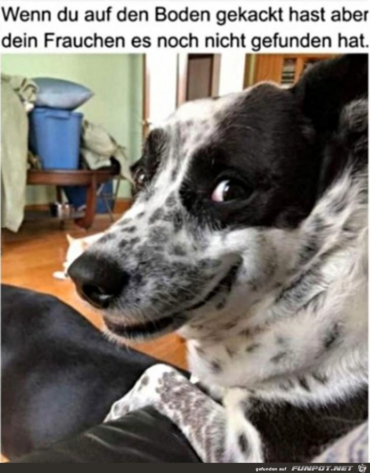 Hund wartet