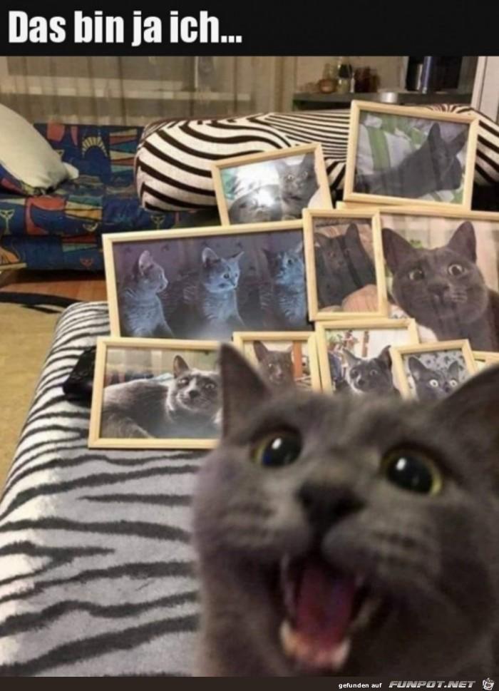 Katze freut sich über Fotos