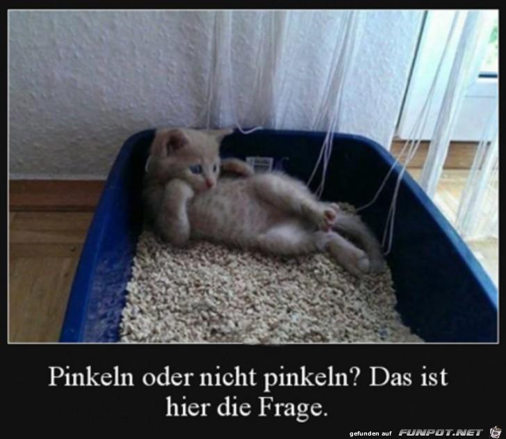 Katze überlegt noch