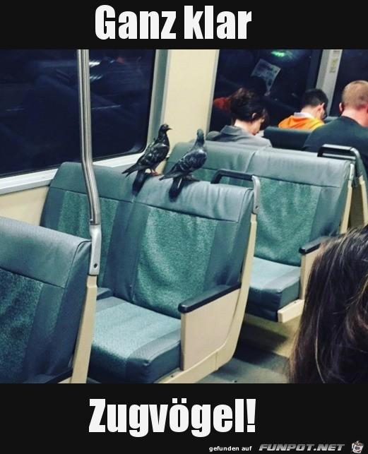 Das sind dann wohl Zugvögel