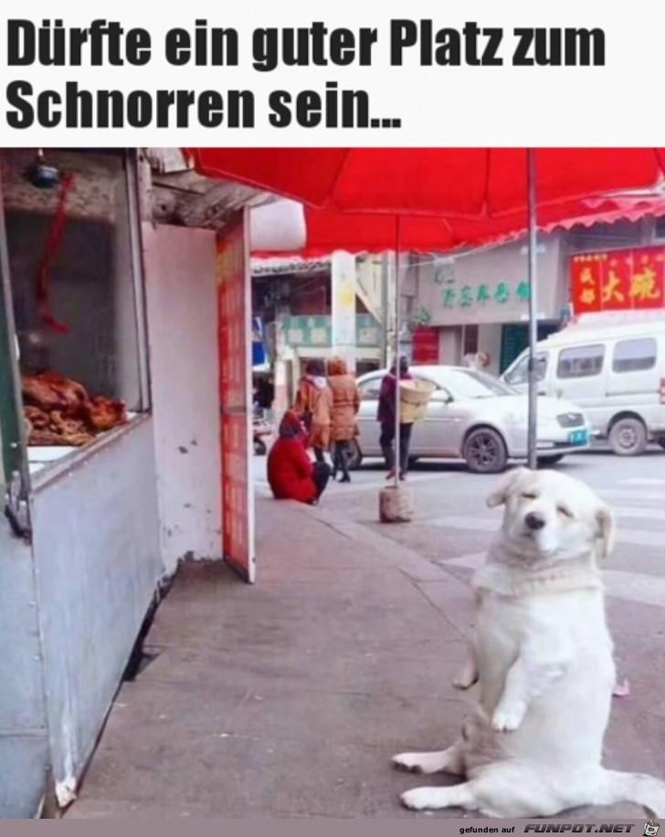 Gechillter Hund
