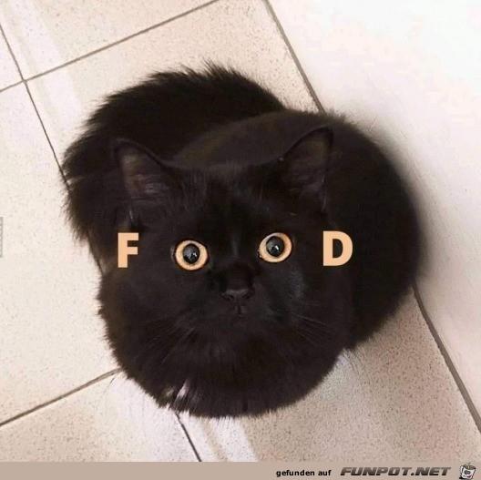 ich will Futter