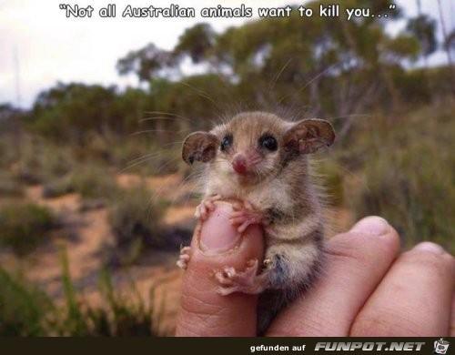 Kein gefährliches Tier