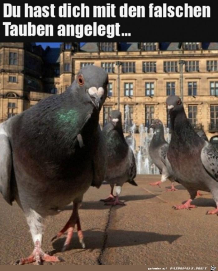 Die Tauben-Gang
