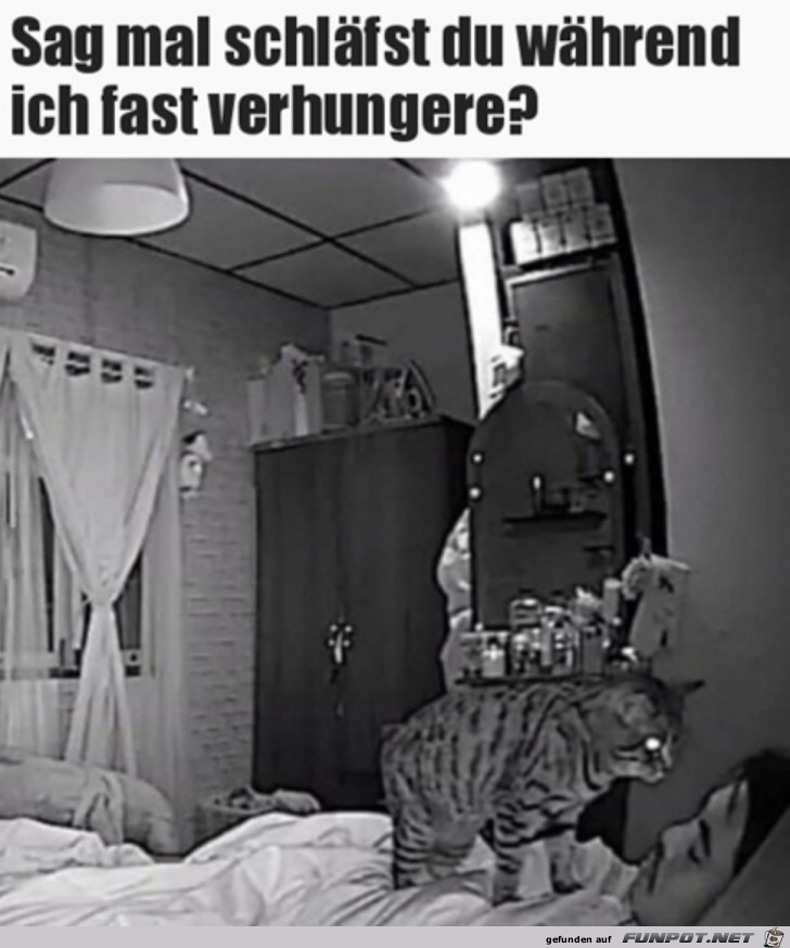 Ich-verhungere-fast.jpg auf www.funpot.net