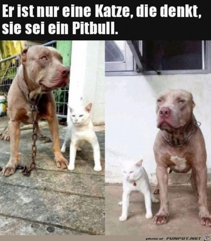 Katze-will-Pitbull-sein.jpg auf www.funpot.net