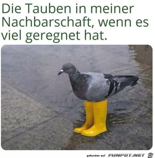 Tauben bei Regen