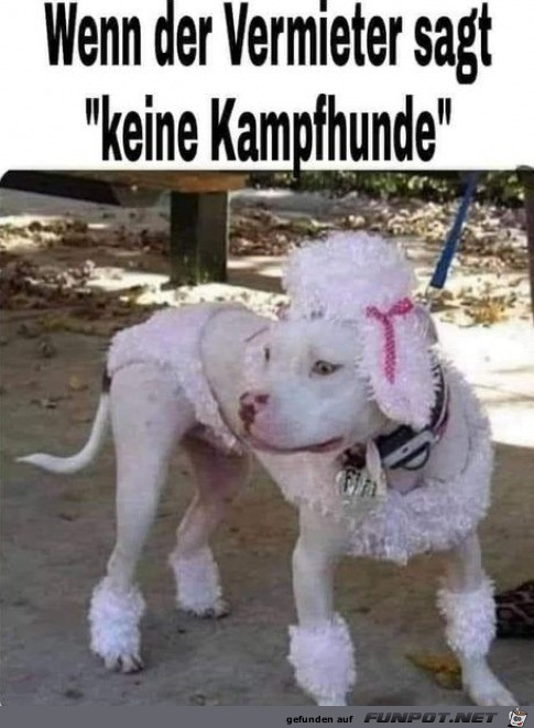 Keine Kampfhunde erlaubt