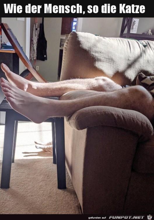 Katze-liegt-da-wie-der-Mensch.jpg auf www.funpot.net