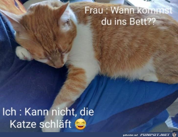 Die Katze schläft