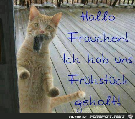 Hallo Frauchen