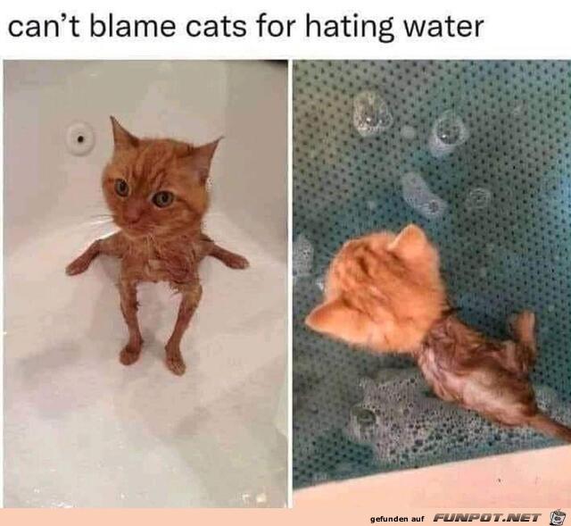 Kein Wunder hassen Katzen Wasser