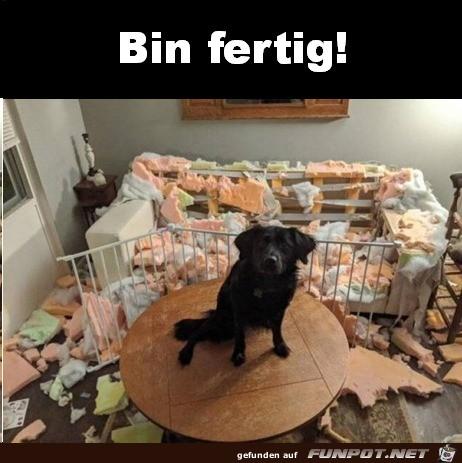 Hund-hat-ganze-Arbeit-geleistet.jpg auf www.funpot.net