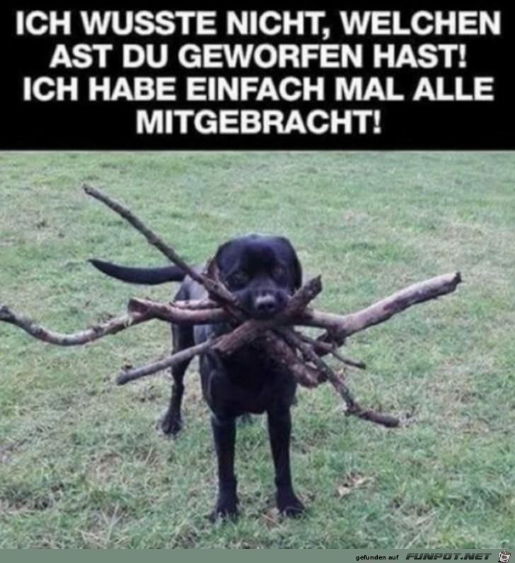 Hund-bringt-viele-Stöcke.jpg auf www.funpot.net