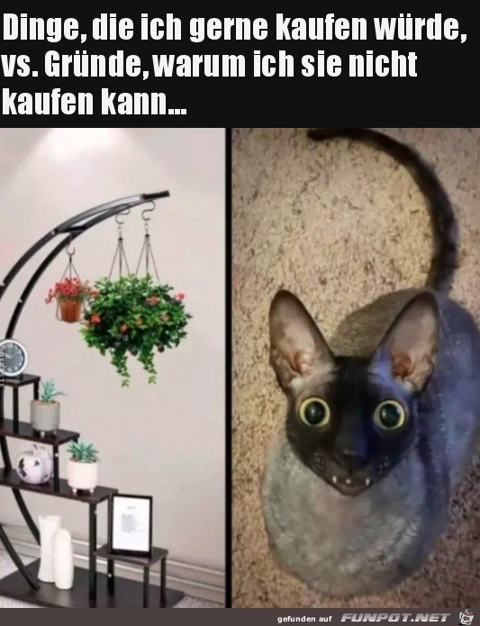 Mit Katzen gehen manche Dinge einfach nicht