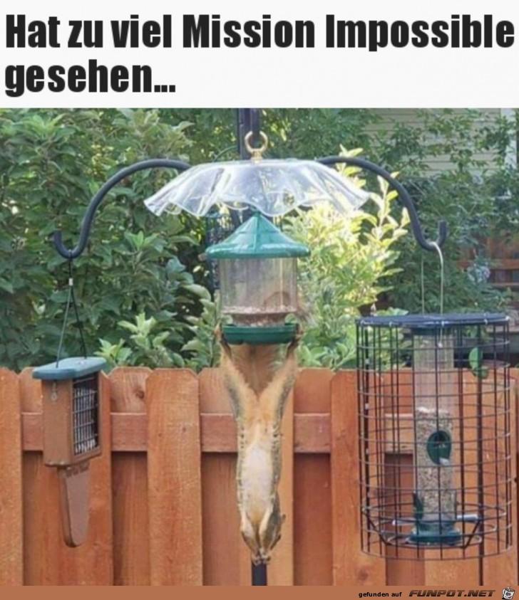 Akrobatisches Hörnchen