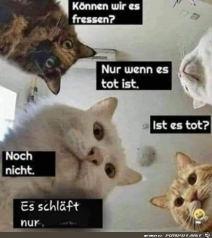 Katzen-Sitzung