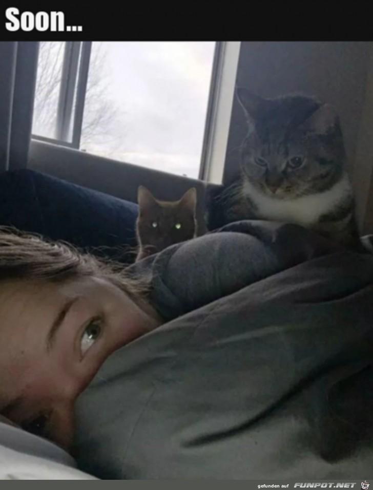 Die Katzen warten