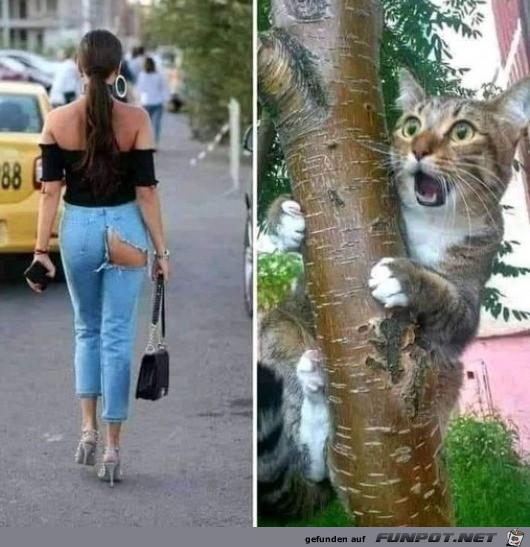 Katze-ist-entsetzt.jpg auf www.funpot.net
