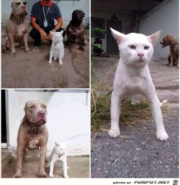 Katze macht Hund nach
