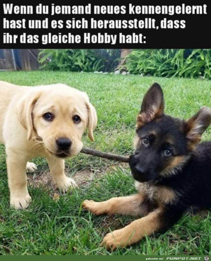 Gleiches Hobby