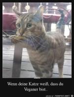 Deine-Katze-ist-schlau.jpg auf www.funpot.net
