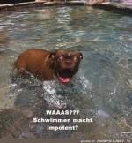 Schwimmen.jpg auf www.funpot.net