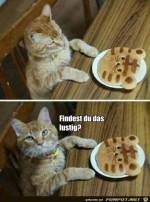 Und-das-findest-du-wohl-auch-noch-lustig?.jpg auf www.funpot.net