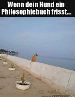 Hund-starrt-aufs-Meer.jpg auf www.funpot.net