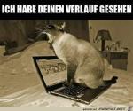 Du-schaust-andere-Katzen-an.png auf www.funpot.net