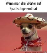 Drei-Worte-Spanisch-gelernt.jpg auf www.funpot.net