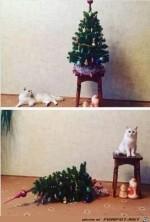 Was-soll-der-Baum-auf-meinem-Hocker.jpg auf www.funpot.net