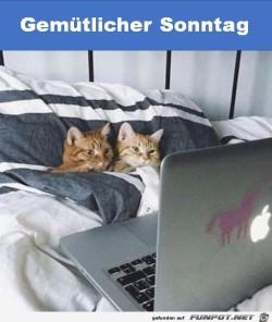 Gemütlicher-Sonntag.jpg auf www.funpot.net