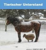 Tierischer-Unterstand.jpg auf www.funpot.net