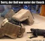 Der-Ball-war-unter-der-Couch.jpg auf www.funpot.net