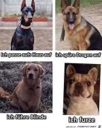 Was-Hunde-alles-können.jpg auf www.funpot.net