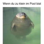 Zu-klein-im-Pool.jpg auf www.funpot.net