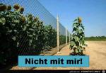 Der-Zaun-interessiert-mich-nicht.png auf www.funpot.net