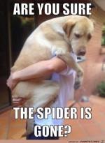 Ist-die-Spinne-weg?.jpg auf www.funpot.net