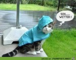 Sch...-Wetter.jpg auf www.funpot.net