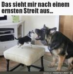 Streit-zwischen-Hunden.jpg auf www.funpot.net